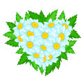 Heart of daisies shaped bunch or chamomiles with leaves Stock Images