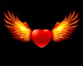 Heart in fiery wings Stock Images