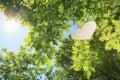Heart floting on a big tree Royalty Free Stock Photo