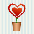 Heart flower with thorns in flowerpot Royalty Free Stock Photography