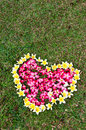 Heart flower on yard Royalty Free Stock Image