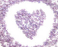 Heart with flowers of lilac Stock Photos