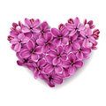 Heart from flowers of a lilac. Stock Images