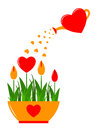 Heart flowers in pot and watering can isolated on white background Stock Photography