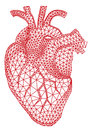 Heart with geometric pattern vector abstract red human mesh illustration Royalty Free Stock Photos