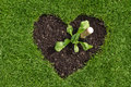 Heart in the lawn with plant and trowel