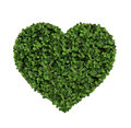 Heart made of clover Isolated on White Background Royalty Free Stock Photo
