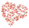 Heart made from Phalaenopsis orchids on white background Royalty Free Stock Photography