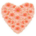 Heart made from pink gerber flowers Royalty Free Stock Photo