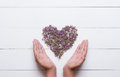Heart made of thymes with young hands holding it on white wooden Royalty Free Stock Photo