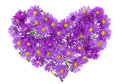 Heart from  magenta chrysanthemums Stock Photography