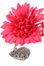 Heart pendant beautiful shot of with artificial gerbera flower on white background Stock Photo