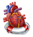 Heart rescue medical health care concept with a human cardiovascular organ in a lifesaver or life belt as a symbol of emergency Stock Image
