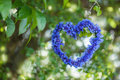Heart shape made of flowers cornflowers with natural boke thro through summer foliage green background Stock Photo