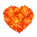 Heart Shape of Orange Gerbera Stock Photography