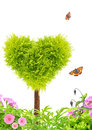Heart shape tree and flowers on white background Stock Image