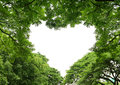Heart shape tree frame Royalty Free Stock Photo