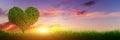Heart shape tree on grass at sunset. Love, panorama Royalty Free Stock Photo