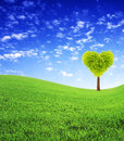 Heart shape tree on green field Stock Photos