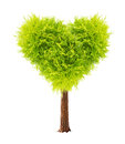 Heart shape tree isolated on white background Stock Photography