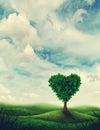 Heart shape tree Royalty Free Stock Photo