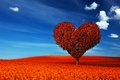 Heart shape tree with red leaves on flower field. Love