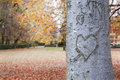 Heart shape on trunk bark with an autumnal background Royalty Free Stock Photo