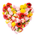 Heart shaped arrangement of fresh tulips colourful symbolic love and romance isolated on white in square format for a Stock Photos