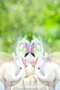 Heart-shaped flamingo, Royalty Free Stock Photo