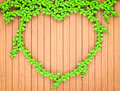 Heart shaped ivy on wood wall green Stock Image