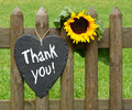 """Heart shaped sign with """"thank you† text and a sunflower on a wooden garden fence Royalty Free Stock Photography"""