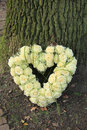 Heart shaped sympathy flowers near a tree Royalty Free Stock Image