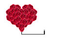 Heart Signs Red rose isolated on white background Royalty Free Stock Photo