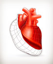 Heart structure Royalty Free Stock Images