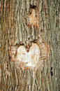 Heart  on a Tree Stock Photos
