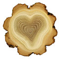 Heart of tree - growth rings of acacia tree - cros Royalty Free Stock Photo