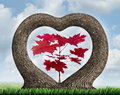 Heart tree with two growing plants merging together in romance giving birth to a red leaf maple as a love concept of beauty in Stock Images