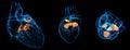 Heart valve Royalty Free Stock Photo