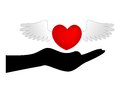 Heart with wings over hand on red love the top of a silhouetted isolated on a white background Stock Photos