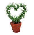 Hearted Plant Royalty Free Stock Photo