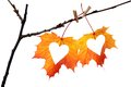 Hearts in autumn leaf Royalty Free Stock Photo