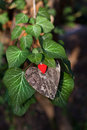 Hearts and valentines day decoration in park outdoor compositions Stock Photography