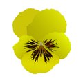 Heartsease flower in vector