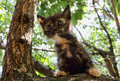 Heartwarming tricolor kitten touching can not get down from the tree Royalty Free Stock Image