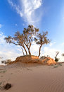 Heat the trees in a desert on background of blue sky Stock Photography