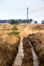 Heather tower path towards the observation brandtoren towering over the landscape at the posbank and veluwe zoom in the Royalty Free Stock Photos
