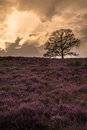 Heathland Stock Photo