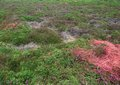 Heathlands detail heathland at cap frehel in brittany france Royalty Free Stock Photography
