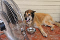 Heavy heat wave tel aviv aug dog cools down with fan and water during on aug according to israel meteorology service the highest Stock Images