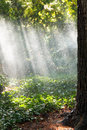 Heavy rain in forest in sunny autumn day crimea Royalty Free Stock Photo